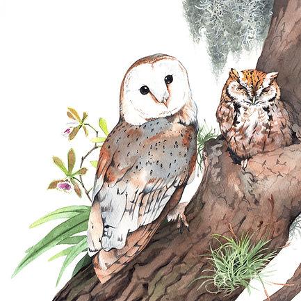 Owls Medium.jpg