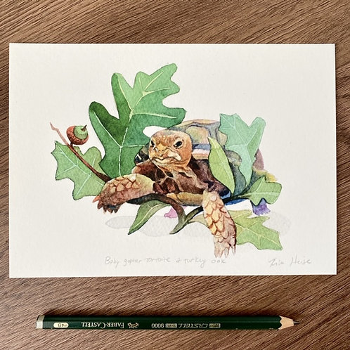 Baby Gopher Tortoise and Turkey Oak small print