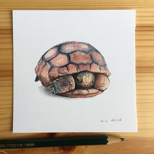 Baby Gopher Tortoise small print
