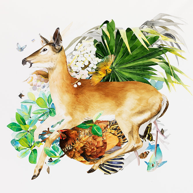Key Deer Watercolor Painting by Kim Heise
