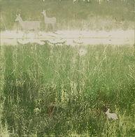 Marl Prairie art by Kim Heise