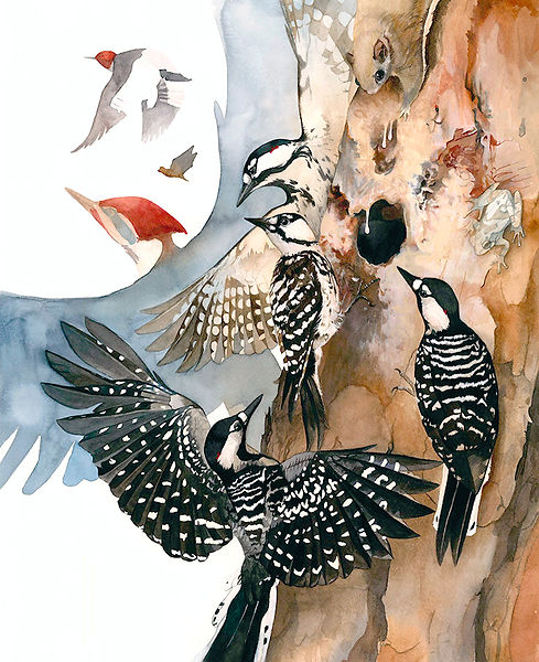 Red Cockaded Woodpeckers Watercolor Painting by Kim Heise