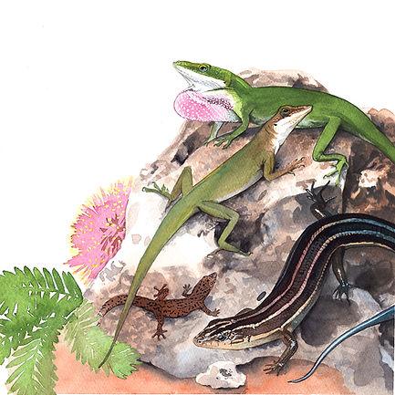 Lizards small.jpg