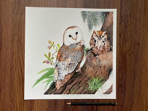 Florida Native Owls
