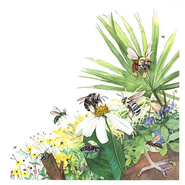 Florida Native Bees Medium.jpg