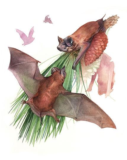 Bonneted Bat watercolor art Kim Heise