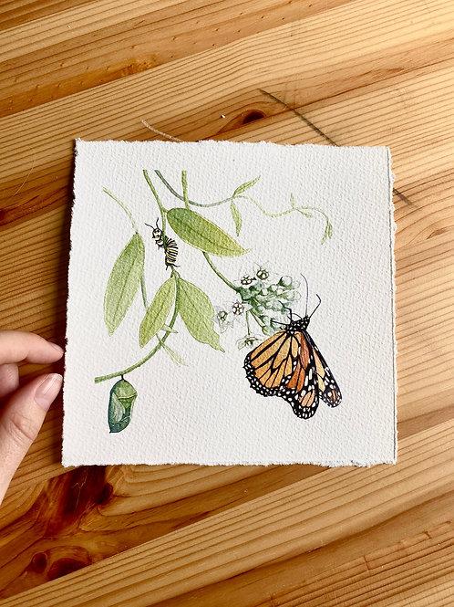 Monarch with Twinevine Original Watercolor