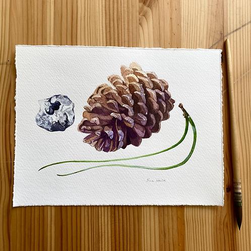 Pine Cone Study original watercolor
