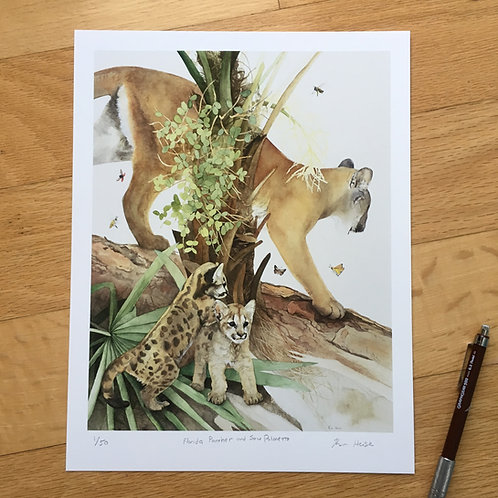 Florida Panther and Saw Palmetto limited edition small print