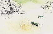 Miami Tiger Beetle art by Kim Heise