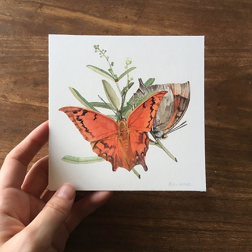 Florida Leafwing Butterfly small print