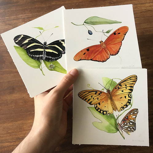 Passion Vine Butterfly small Prints