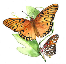 Gulf Fritillary Butterfly watercolor painting by Kim Heise