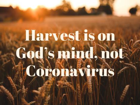 Harvest is on God's mind, not Coronavirus