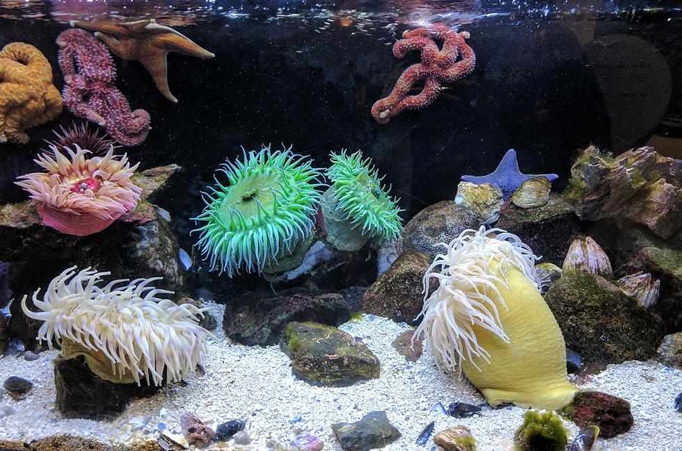 Fish Tank Scene