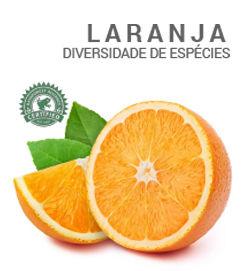 laranjas.jpg