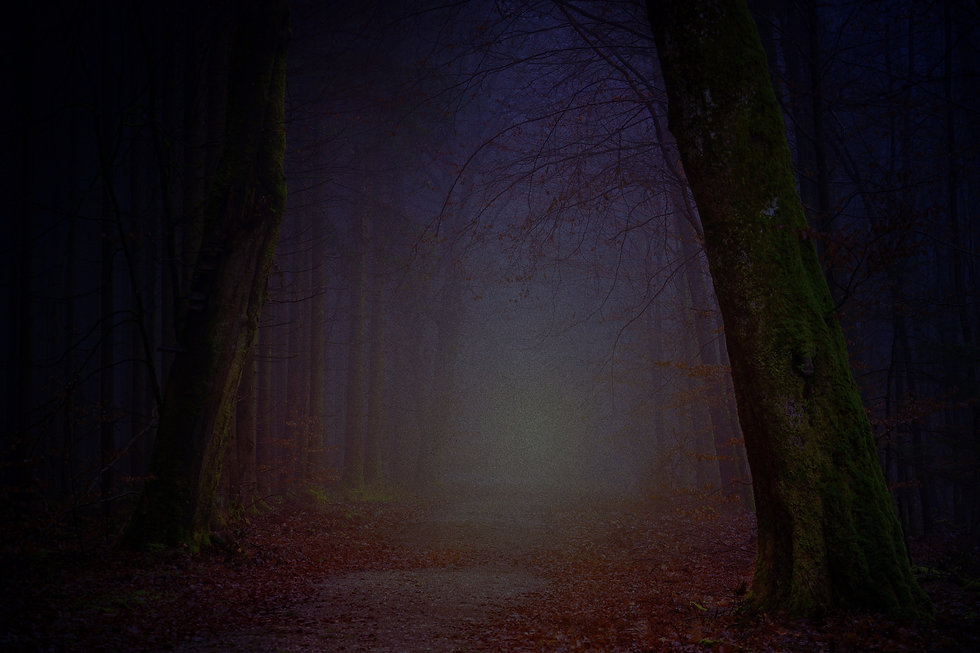 Forest%2520Light_edited_edited.jpg