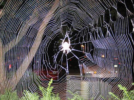 Spider in Web at night.jpg