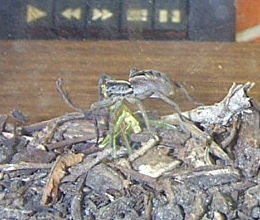 Spider pics 2000