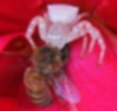 Flower Spider.jpg