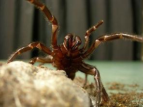 Spider Facts.jpg