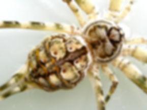 Tree Trunk Spider Closeup