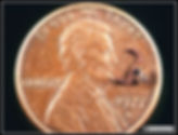 Pseudoscorpion on a US penny