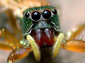 Spider eyes.jpg