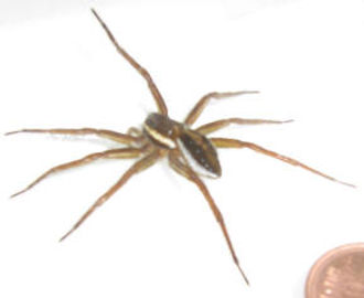 Spider Removal.jpg