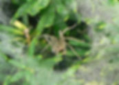 Spider in web on plants.jpg