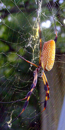 Golden Silk web.jpg