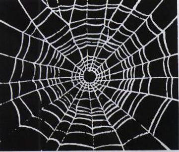 Preserving a Spider Web