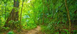 A true Rainforest