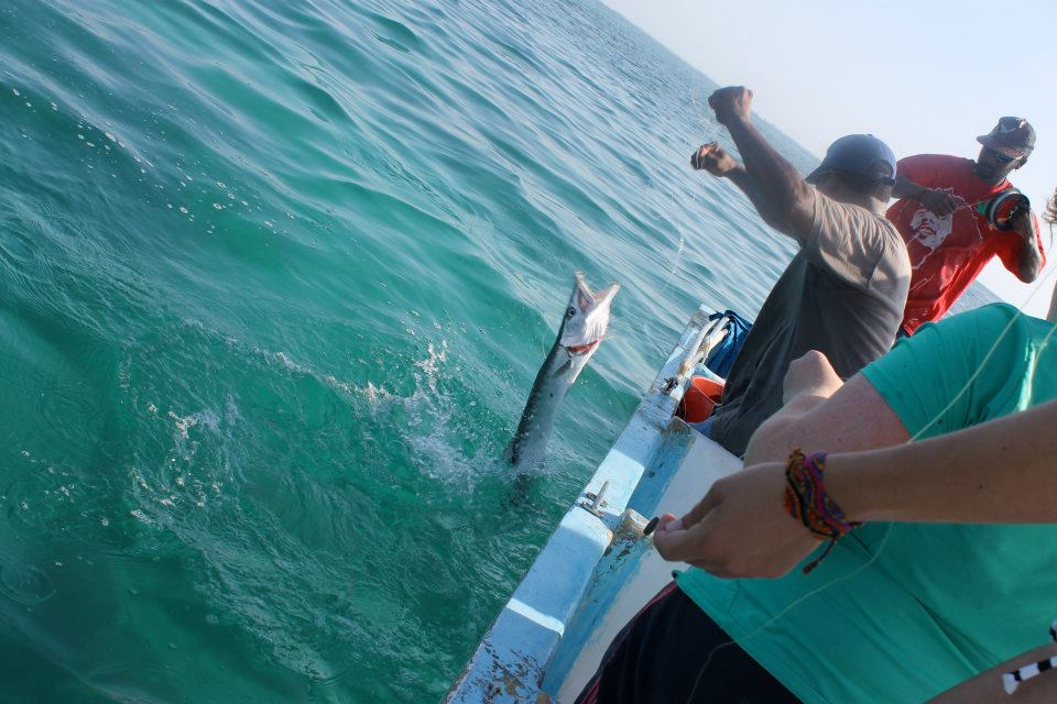 Fishing a Barracuda