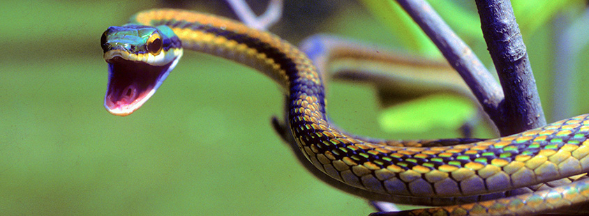 biodiversity_4.jpg