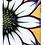 Thumbnail: #026 Kaleidoscope Daisy - Protective Phone Case