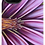 Thumbnail: #39 Lotus - Protective Phone Case