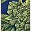 Thumbnail: #37 Cannabis II - Protective Phone Case