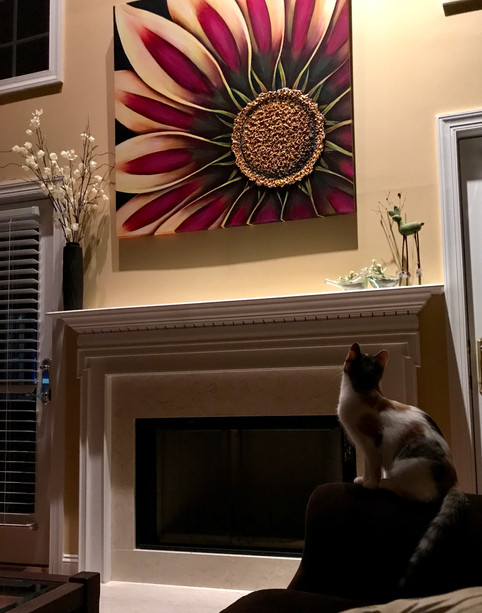 "48"" x 48"" Gazania...even your pets will love it!"
