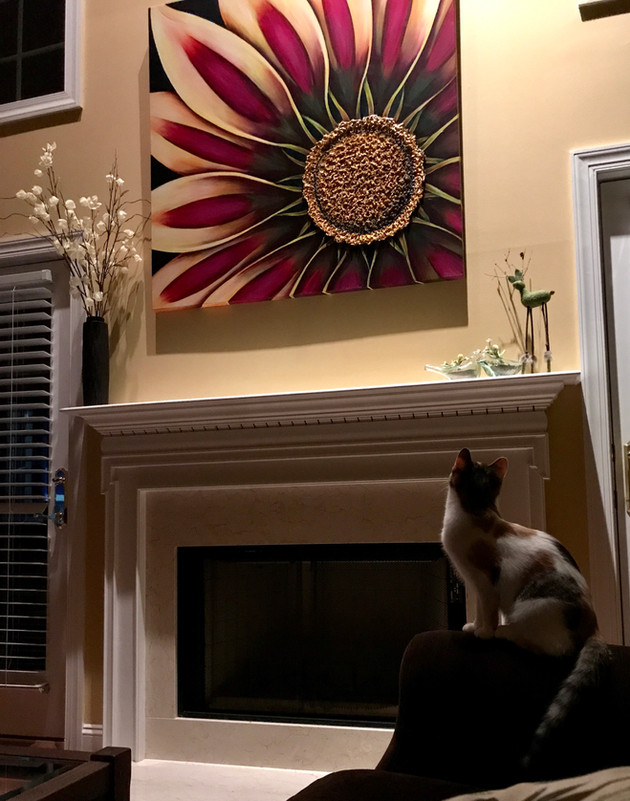 """48"""" x 48"""" Gazania...even your pets will love it!"""