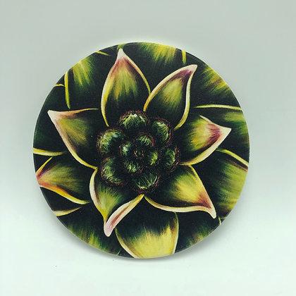Coaster - Succulent #09