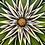"""Thumbnail: Artichoke #1168 (16"""" x 16"""")"""