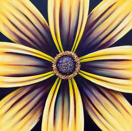 "Purple eyed Susan II #1239 (16"" x 16"")"