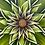 "Thumbnail: Peridot #1152  (30"" x 30"")"