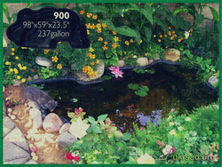 Pond 900