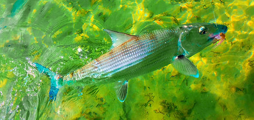 Bonefish H2obonefishing