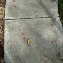 Sidewalk in Cary NC