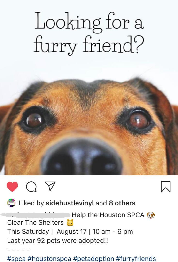 Pet Adoption SM.png