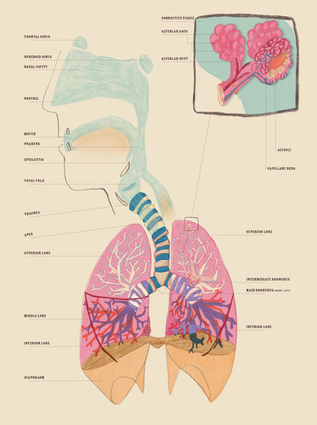 lungs-01.png