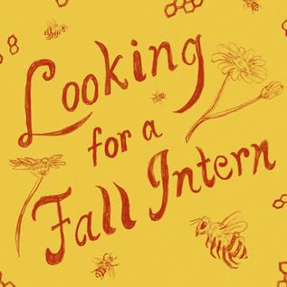 looking-for-an-intern.jpg